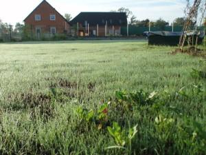 založený trávník